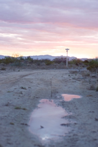 Purple lights at sunset after a rain in the Mexican desert