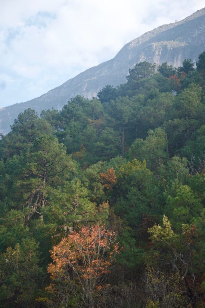 View over the green forests along rocky mountainsides