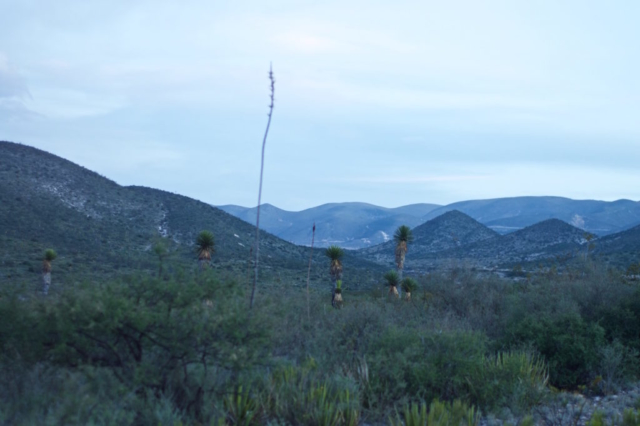 Blue hour in Mexico over Joshua trees and mountains