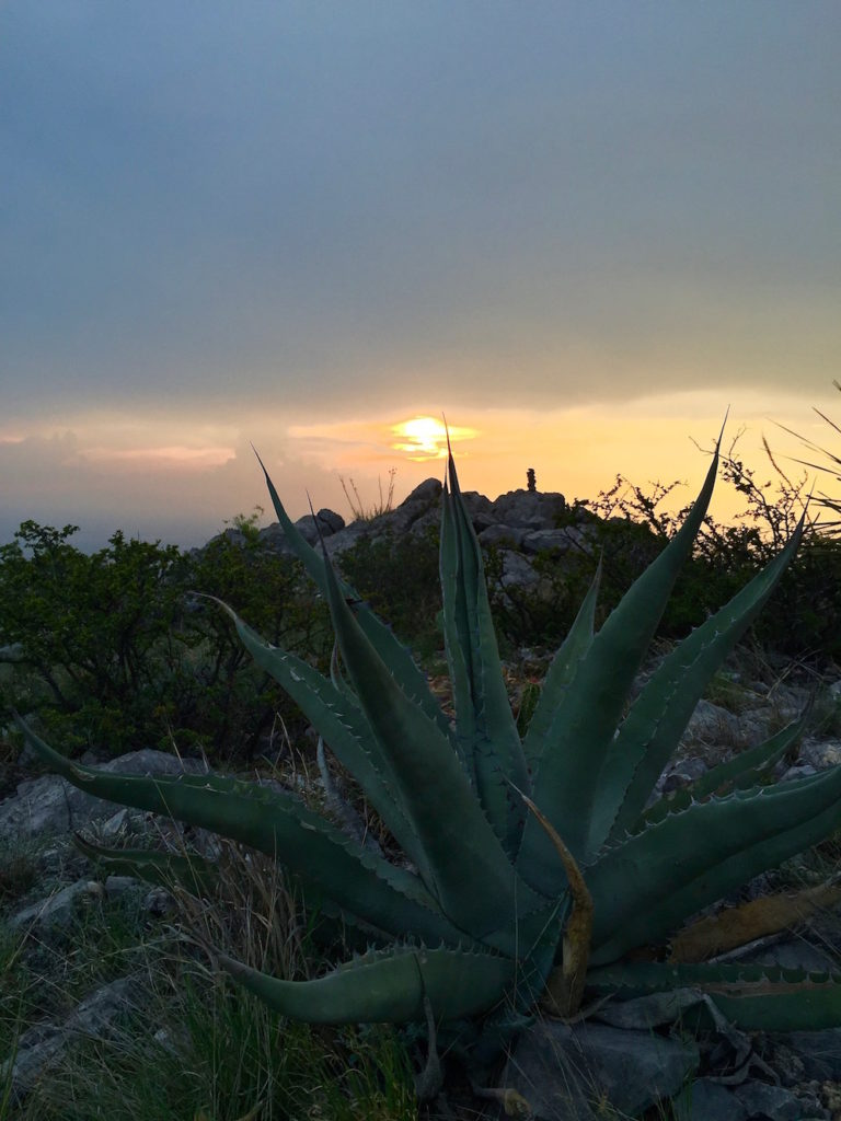 Agave in the mountains with the sun setting in the background