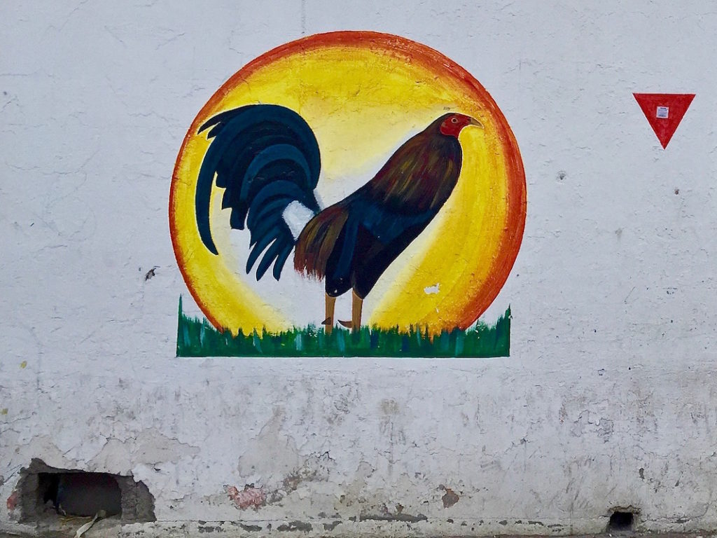 Painting of a rooster on the wall of a rooster fighting arena in Mexico