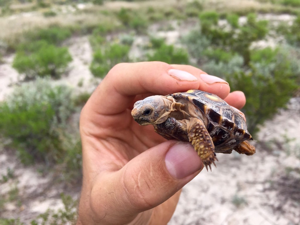 Holding a tiny desert turtle in my hand