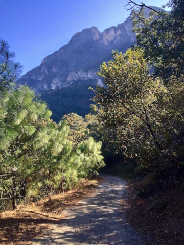 Path through the forest on the mountains close to Monterrey