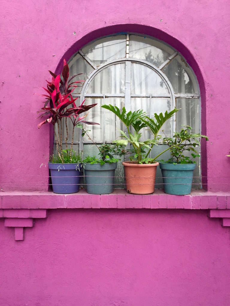 Plants on a pink window bench of a pink house in Mexico city
