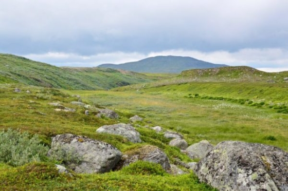 View over the green and sparse vegetation and mountains in Lapland, Sweden