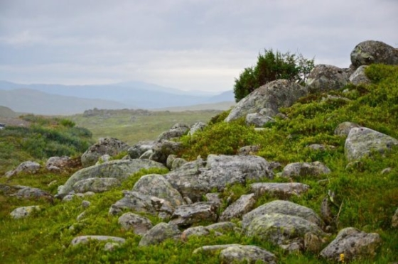 View over the rugged terrain in the mountains in Lapland. Stones in the front and only small vegetation in the back and very cloudy
