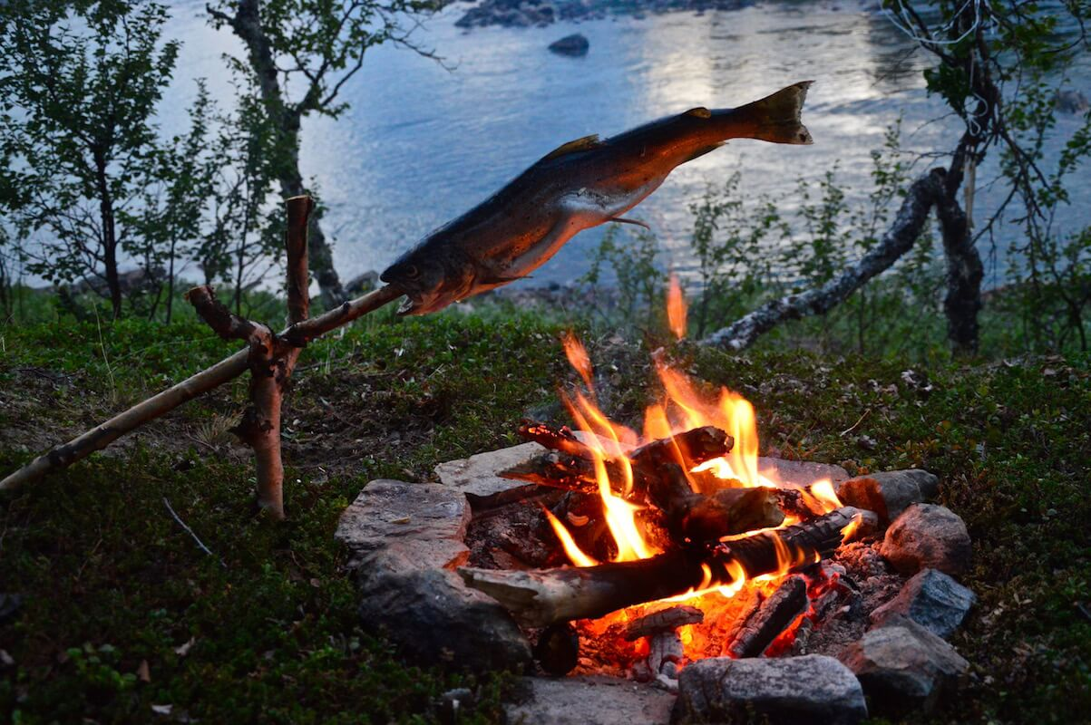 Freshly caught brown trout on a stick over the open fire in Lapland, Sweden