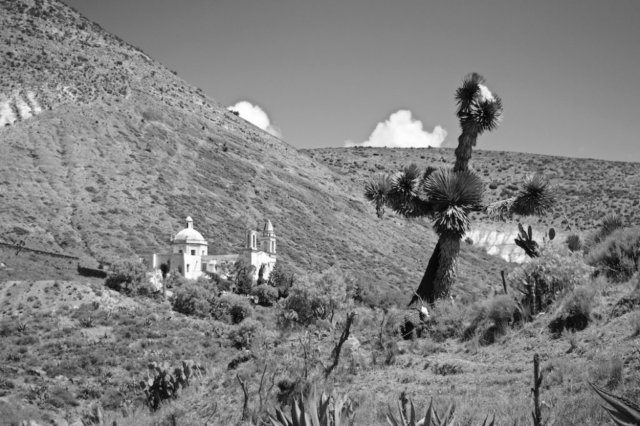 Joshua tree in front of a white church on the sparse mountains around Real de Catorce, Mexico