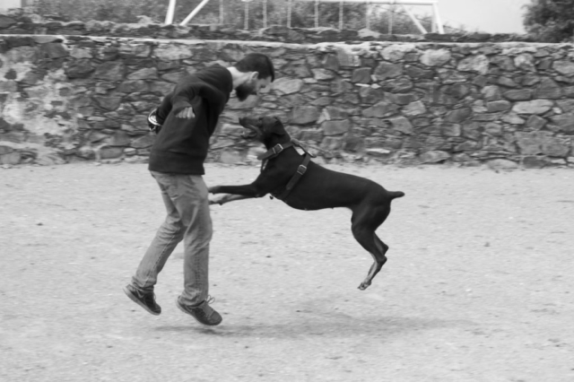 Peter and Merida our doberman playing in a bull fighting arena