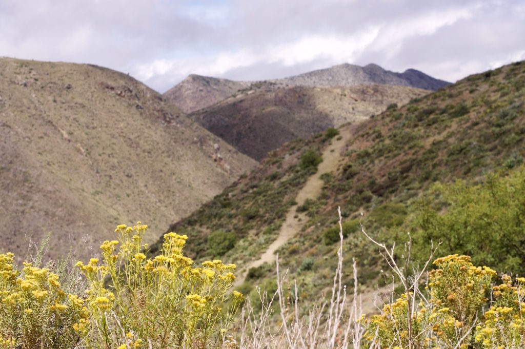 Yellow flowers in front of some canyons in the Sierra Madre around Real de Catorce, Mexico