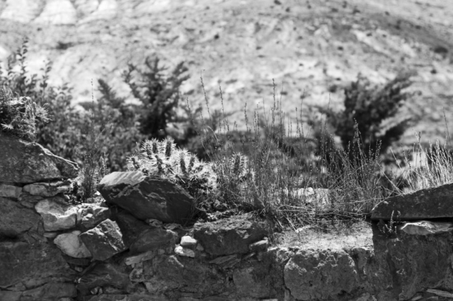Small cactus on a stone wall captured in black and white