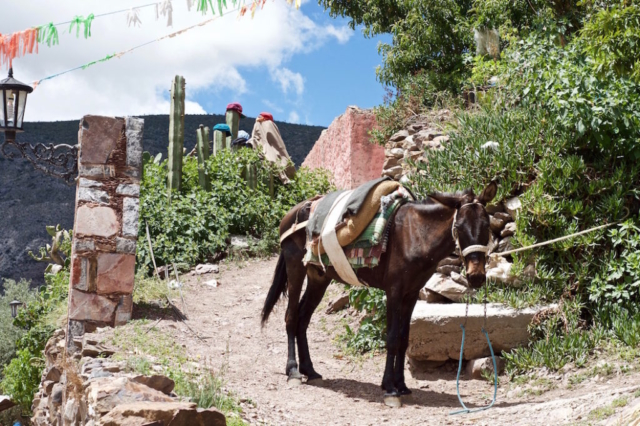A donkey loaded with blankets waiting in the sun, Mexico
