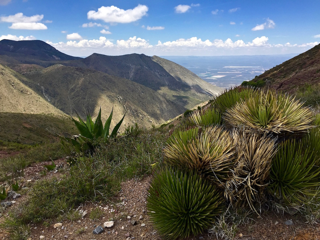 Spiky plants in front of the view over the valley until the horizon, Mexico